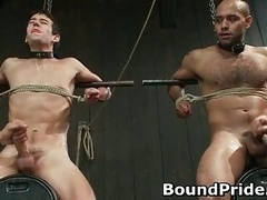 Hogtied homosexual slaves getting jerked off