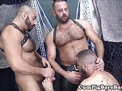 Dilf bear cocksucked in bareback threesome