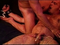 CBT Bear blows me as I electro his balls