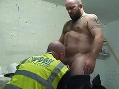 Hairy Workmen Bears