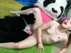 Wild panda bear bangs stunner with fragile body in her room