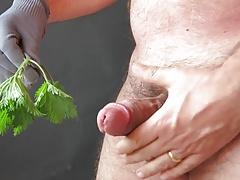 Stinging netlles on cock