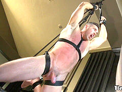 dangled domination & submission sub cock cropped by muscle dom